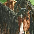 Wild Horses of North America - Art Group